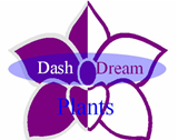 Dash Dream Plant Inc